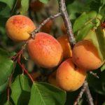 Védett eredetű zöldségek és gyümölcsök