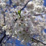 A Tündérkert-mozgalom az őshonos gyümölcsfajtákért
