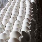 Magyarországra nem érkezett a szalmonellás német tojásból