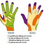 Kézmosás mindenek előtt…