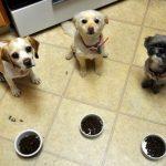 Táp-teszt – mert nem mindegy, hogy mi lesz a kutya vacsorája
