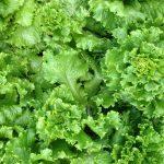 Zöldek és zöldségek