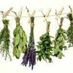 Szárított fűszer- és gyógynövény házilag