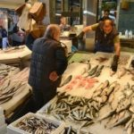 Minden amit a halról tudni kell