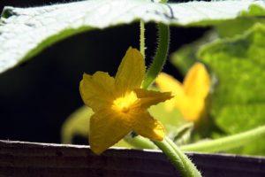 flower-1382392_640