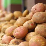 A krumpli ideje