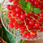 10 dolog… Amit a ribiszkéről tudni érdemes