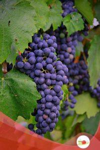 grape-2669939_640