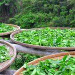 10 dolog, amit a teáról tudni kell