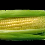 Sokszínű kukorica
