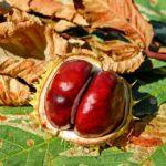 Az ősz gyümölcsei: mandula és gesztenye