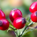Sokoldalú piros bogyók