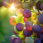"""""""A szőlő szebbé teszi a Földet és gazdagabbá az asztalt"""""""