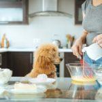Házi kedvenceink a konyhában